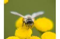 Avertizate apicultori!...